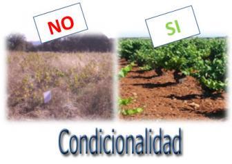 condicionalidad