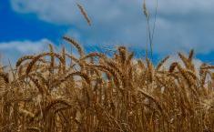 Castilla-La Mancha amplía en 400.000 euros el crédito de la convocatoria de seguros agrarios, alcanzándose ya los 5 millones de euros
